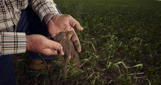تربة الزراعية