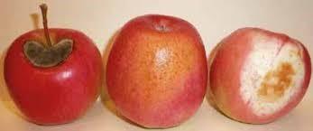 تفاح 8