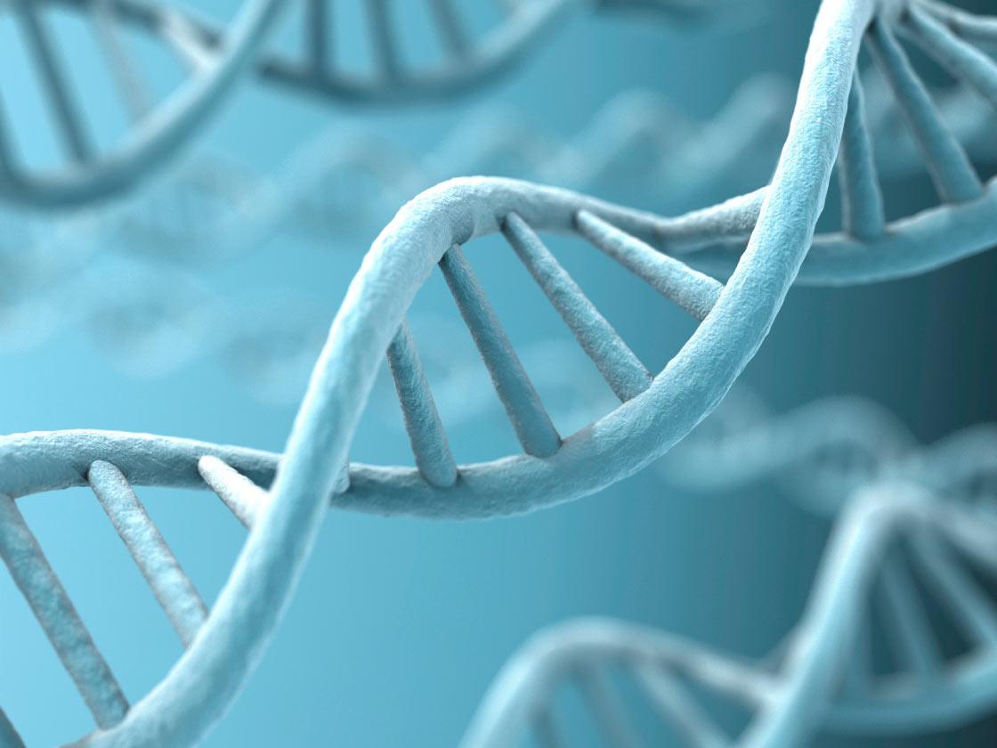 تنظيم عمل الجينات