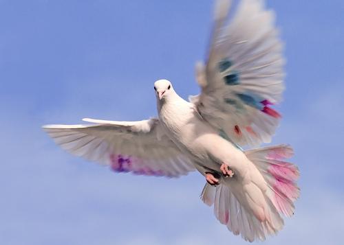 جفون الطيور