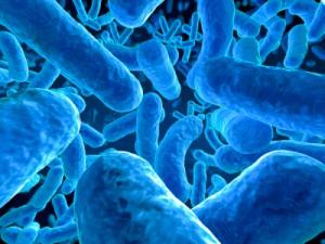 becteria 8