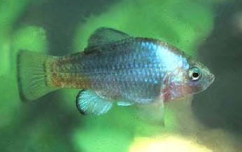 fish 55