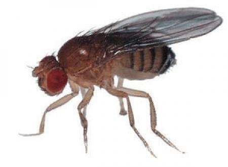 fly fr6