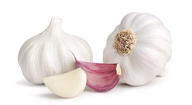 garlic8